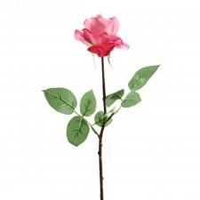 "27""CAROLINE ROSE A25"