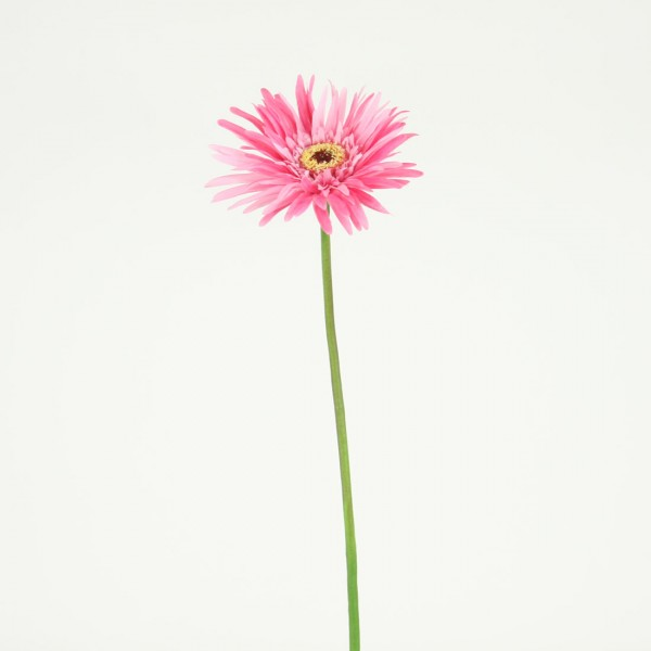 Gerbera daisy silk flower stem of the day shinoda design center gerbera daisy at shinoda design center mightylinksfo