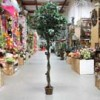 Shinoda Design Center 10-ficus-tree-w-pot-m25