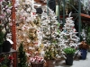 santa_ana_christmas_trees_2010_2
