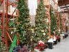 santa_ana_christmas_trees_2010_3