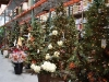 santa_ana_christmas_trees_2010_6