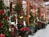 santa_ana_christmas_trees_2010_7